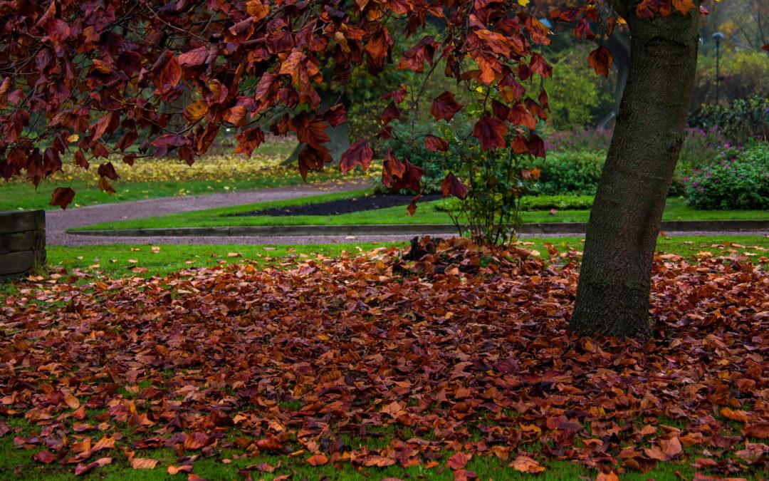 Autumn Garden Tasks for the Minneapolis Area